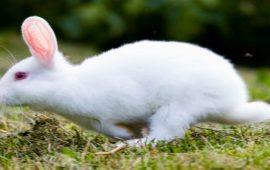 في مزاد علني.. بيع أغلى أرنب في العالم