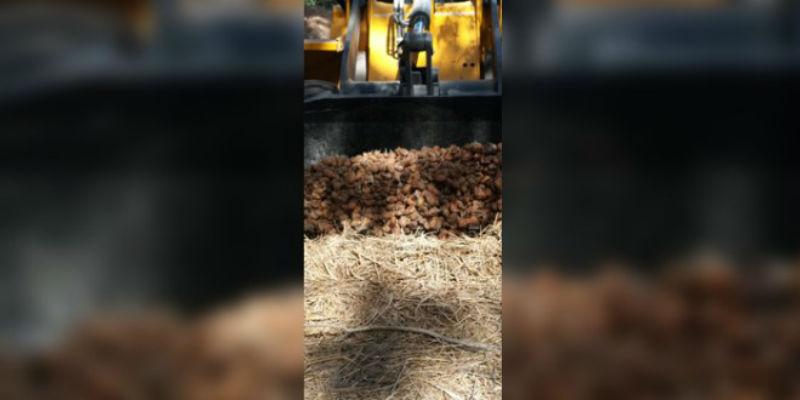 صورة بعد إستعمال مبيدات فلاحية غير مرخصة.. إتلاف أطنان من البطاطس في بركان