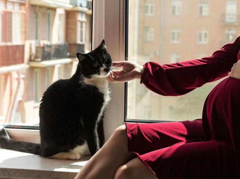 Photo of تربية القطط في فترة الحمل تهدد صحة جنينك