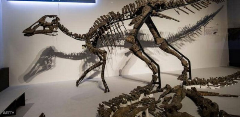 صورة العثور على هيكل عظمي لديناصور يعود لـ 230 سنة