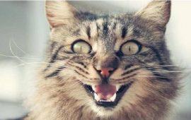 """قطة """"شرسة"""" تحبس صاحبتها لمدة يومين داخل المطبخ"""