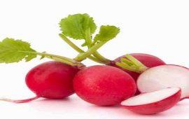 تناول الفجل الأحمر يقلل من خطر إصابتك بأمراض القلب والشرايين