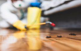 3 نصائح للتخلص من حشرات فصل الربيع