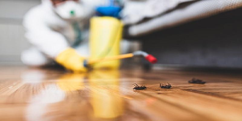 Photo of 3 نصائح للتخلص من حشرات فصل الربيع
