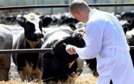 أونسا حصنت أزيد من 15,5 مليون رأس ضد الأمراض الحيوانية