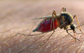 """منظمة الصحة العالمية تكشف حقيقة انتقال """"كورونا"""" عبر لدغات البعوض"""