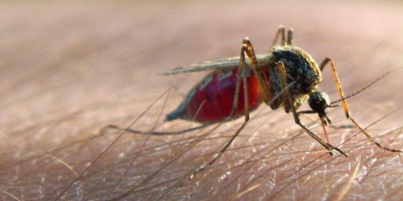 "Photo of منظمة الصحة العالمية تكشف حقيقة انتقال ""كورونا"" عبر لدغات البعوض"