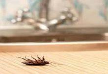 صورة مع ارتفاع درجات الحرارة.. طريقتين مضمونتين لطرد الصراصير من المنزل