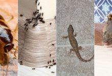 صورة ملف خاص.. حيل وطرق بسيطة ومضمونة للتخلص من حشرات فصل الصيف