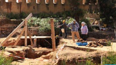 صورة يتميز بأسنانه الكبيرة ويهجم على فرائس أكبر منه.. اكتشاف جديد ومثير بالمغرب